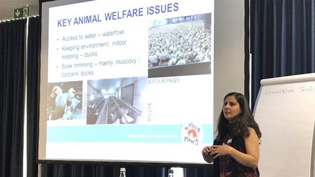 Nachbericht Infotag Textil und Tierschutz Vortrag 3